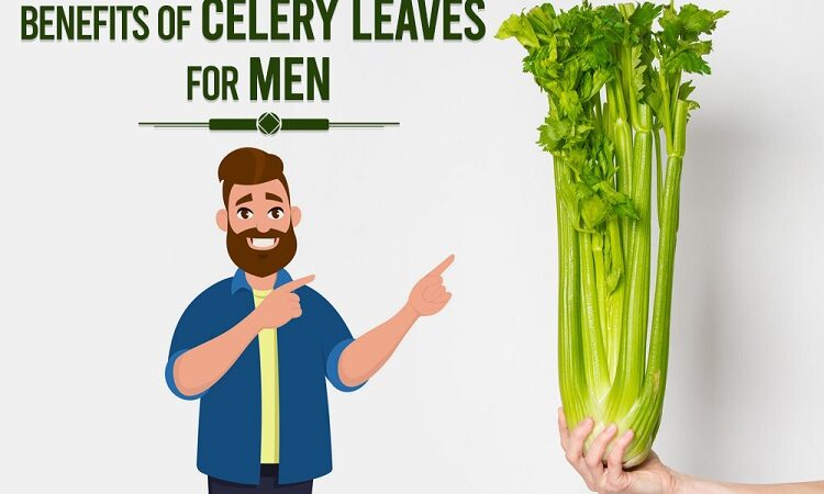 Benefits Of Celery Leaves For Men You Should Consider